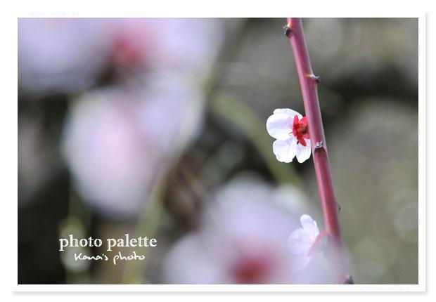 春の日きらり.jpg