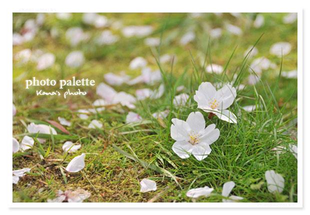 春の落とし物.jpg