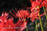 秋の赤い風景.jpg