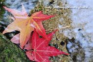 秋色のはじまり.jpg