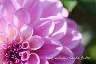 autumn pink.jpg