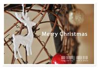 white reindeer.jpg